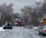Ice Storm Downed Trees, Vaughan-1