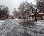 Ice Storm Downed Trees, Vaughan-4