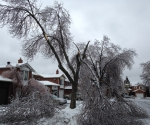 Ice Storm Downed Trees, Vaughan-9