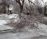 Ice Storm Downed Trees, Vaughan-10