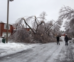 Ice Storm Downed Trees, Vaughan-12