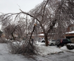 Ice Storm Downed Trees, Vaughan-13