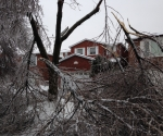 Ice Storm Downed Trees, Vaughan-15