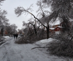 Ice Storm Downed Trees, Vaughan-16