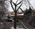 Ice Storm Downed Trees, Vaughan-24