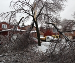 Ice Storm Downed Trees, Vaughan-28