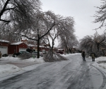 Ice Storm Downed Trees, Vaughan-33
