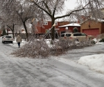 Ice Storm Downed Trees, Vaughan-35