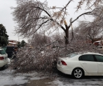 Ice Storm Downed Trees, Vaughan-39
