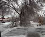 Ice Storm Downed Trees, Vaughan-41