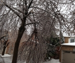 Ice Storm Downed Trees, Vaughan-45