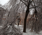Ice Storm Downed Trees, Vaughan-46