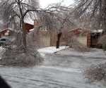 Ice Storm Downed Trees, Vaughan-50