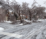 Ice Storm Downed Trees, Vaughan-52
