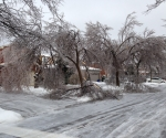 Ice Storm Downed Trees, Vaughan-53