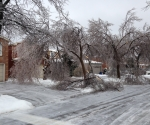 Ice Storm Downed Trees, Vaughan-54