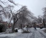 Ice Storm Downed Trees, Vaughan-57