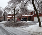 Ice Storm Downed Trees, Vaughan-58