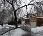 Ice Storm Downed Trees, Vaughan-61