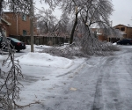 Ice Storm Downed Trees, Vaughan-63