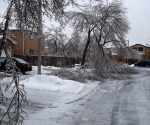 Ice Storm Downed Trees, Vaughan-64