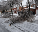 Ice Storm Downed Trees, Vaughan-65