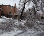 Ice Storm Downed Trees, Vaughan-68