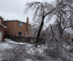 Ice Storm Downed Trees, Vaughan-69