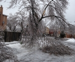 Ice Storm Downed Trees, Vaughan-70