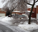 Ice Storm Downed Trees, Vaughan-72