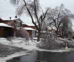 Ice Storm Downed Trees, Vaughan-79