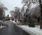 Ice Storm Downed Trees, Vaughan-81