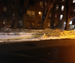 Ice Storm Downed Trees, Toronto-84