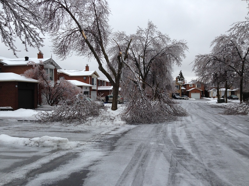 Ice Storm Downed Trees, Vaughan-5