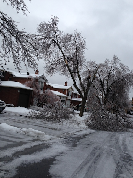 Ice Storm Downed Trees, Vaughan-6