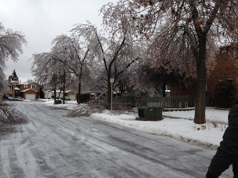 Ice Storm Downed Trees, Vaughan-7