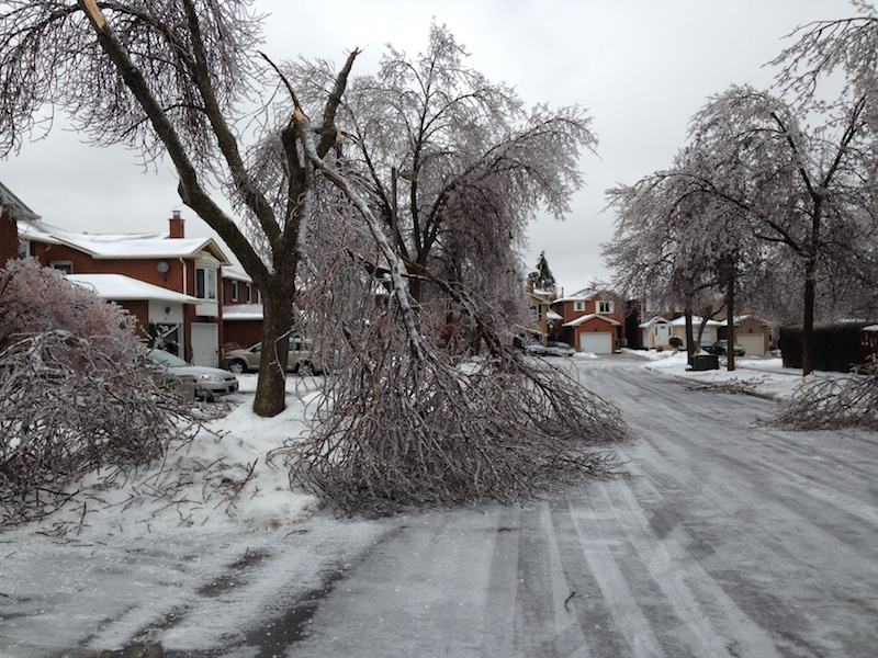 Ice Storm Downed Trees, Vaughan-8