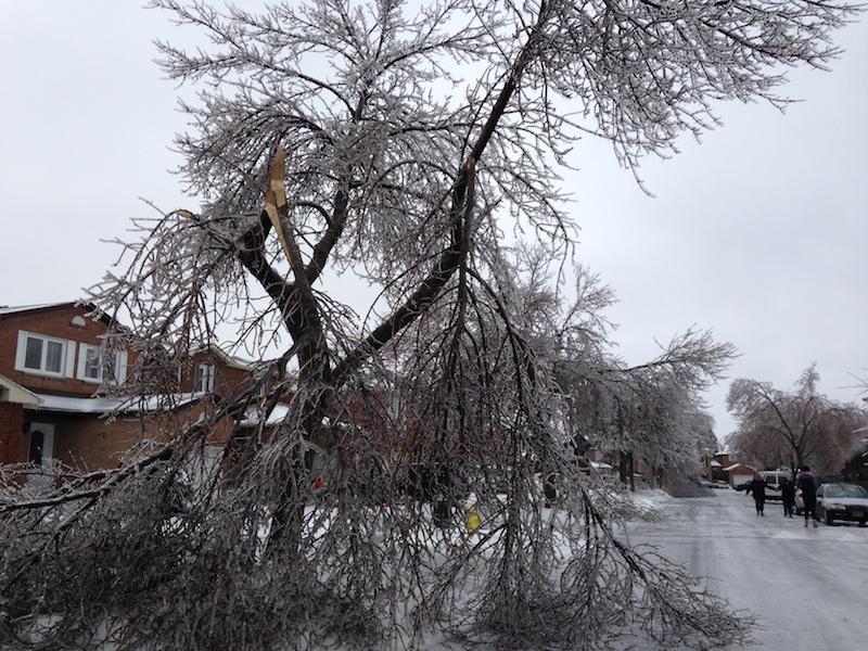 Ice Storm Downed Trees, Vaughan-11