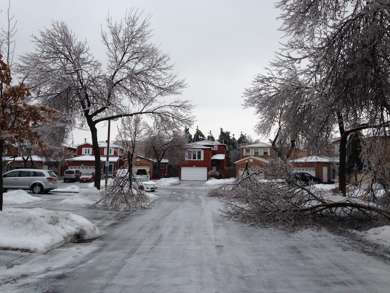 Ice Storm Downed Trees, Vaughan-17
