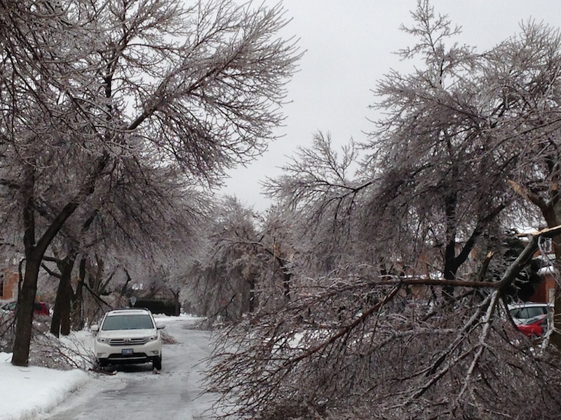 Ice Storm Downed Trees, Vaughan-20