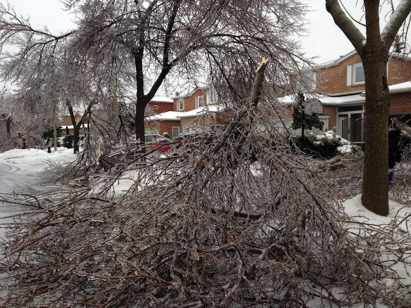 Ice Storm Downed Trees, Vaughan-26