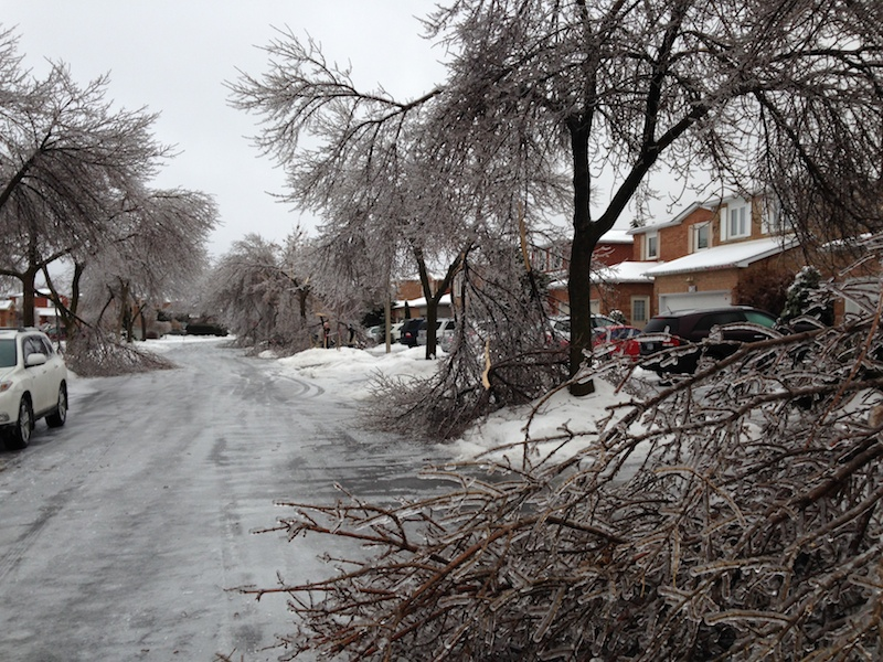 Ice Storm Downed Trees, Vaughan-27
