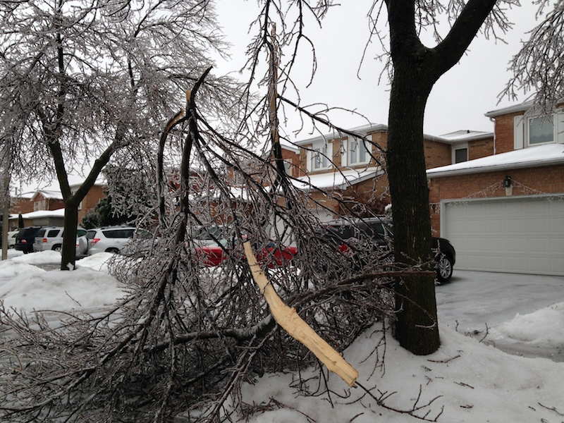 Ice Storm Downed Trees, Vaughan-30