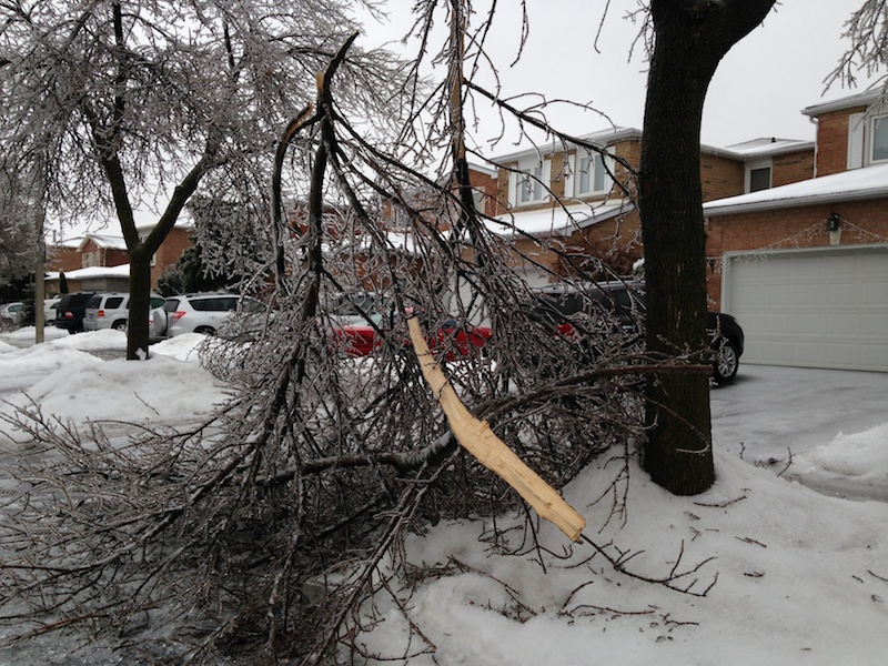 Ice Storm Downed Trees, Vaughan-31