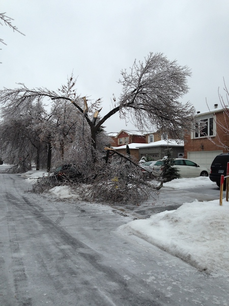 Ice Storm Downed Trees, Vaughan-34