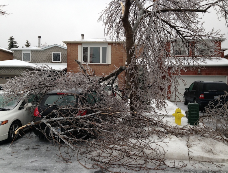 Ice Storm Downed Trees, Vaughan-36