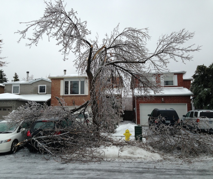 Ice Storm Downed Trees, Vaughan-37