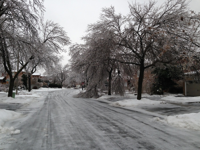 Ice Storm Downed Trees, Vaughan-38