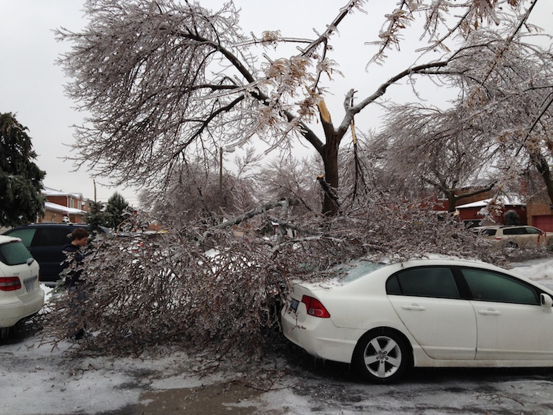 Ice Storm Downed Trees, Vaughan-40