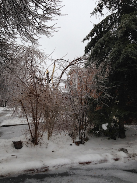 Ice Storm Downed Trees, Vaughan-43